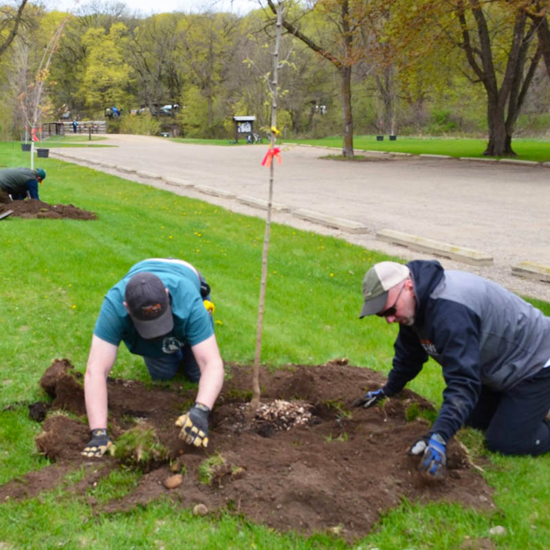 two volunteers filling the hole of a newly planted tree