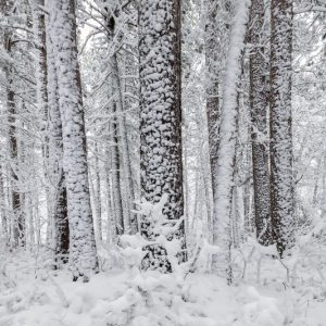 Snowy Itasca State Park by Jelieta Walinski Ph.D