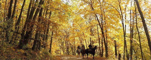 Fall horse back riding