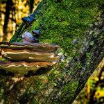 mushroom and lichen on tree