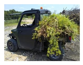 invasive plants loaded to transport