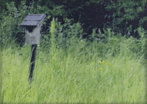 bluebird house with green grass around it