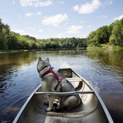 dog in canoe on Mississippi