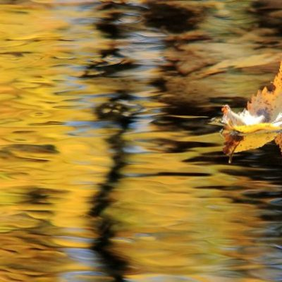one yellow leaf on creek reflecting yellow