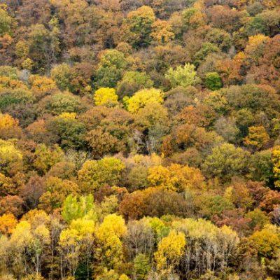 golden forest top