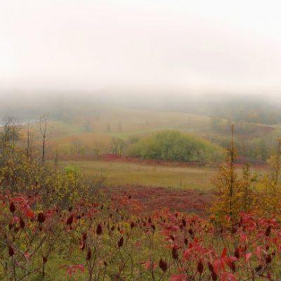 fall colors foggy